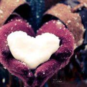 Hội những người thích đọc truyện ngắn buồn về tình yêu